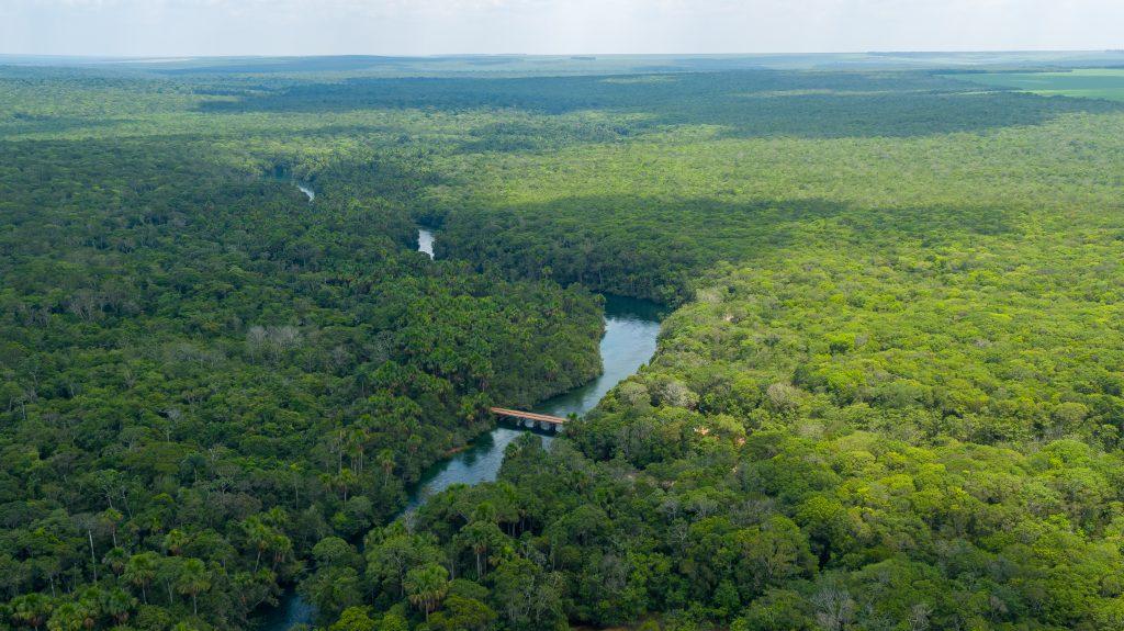 Area de preservação (5)